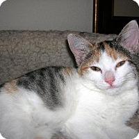 Adopt A Pet :: Marbles - Chandler, AZ