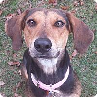 Adopt A Pet :: Lucy - Staunton, VA