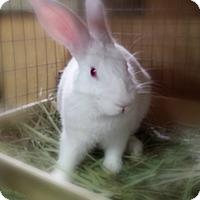 Adopt A Pet :: Aiden - Williston, FL