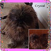 Adopt A Pet :: Crystal - San Antonio, TX
