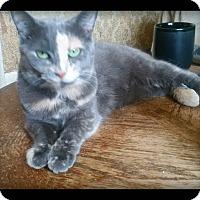Adopt A Pet :: Corrine - london, ON