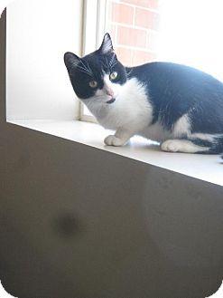 Domestic Mediumhair Cat for adoption in Flora, Illinois - Liz Taylor
