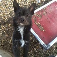 Adopt A Pet :: Hobie - Fair Oaks Ranch, TX