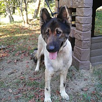 German Shepherd Dog Mix Dog for adoption in Louisville, Kentucky - Ezra