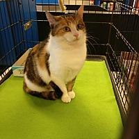 Adopt A Pet :: Leeta - Avon, OH