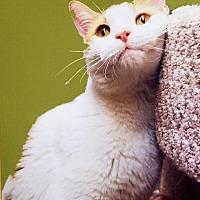 Adopt A Pet :: Sky - Winchester, CA