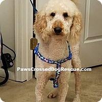 Adopt A Pet :: Taffy - Hedgesville, WV