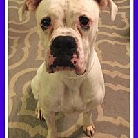 Adopt A Pet :: Mason - Hurst, TX