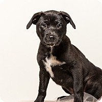 Adopt A Pet :: LENA - Memphis, TN