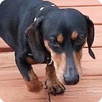 Adopt A Pet :: Stan Starbucks - Houston, TX