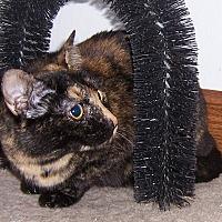 Adopt A Pet :: Tina - Oklahoma City, OK