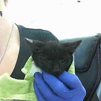 Adopt A Pet :: JACK - San Martin, CA