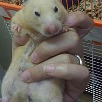 Adopt A Pet :: Rose - Fall River, MA