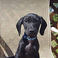 Adopt A Pet :: Cadbury - New Oxford, PA
