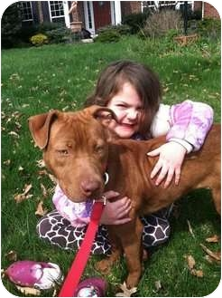 American Pit Bull Terrier Mix Dog for adoption in Olmsted Falls, Ohio - Shakira
