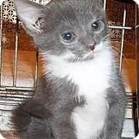Adopt A Pet :: Jazzman - Acme, PA