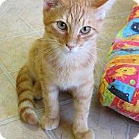 Adopt A Pet :: Shandy - Mobile, AL