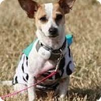 Adopt A Pet :: Hattie - Perfect Apartment Siz - Ocala, FL