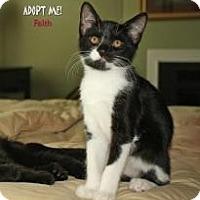 Adopt A Pet :: Faith - justin, TX