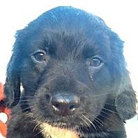 Adopt A Pet :: NELSON - Ooltewah, TN