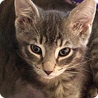 Adopt A Pet :: Cracker - Wenatchee, WA