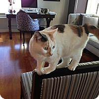 Adopt A Pet :: Ruth - Riverside, RI