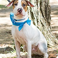 Adopt A Pet :: Nacho - Marietta, GA