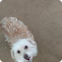 Adopt A Pet :: Dulce - Simi Valley, CA