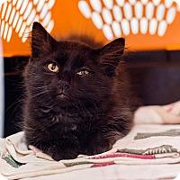 Adopt A Pet :: Tommy - Fredericksburg, VA