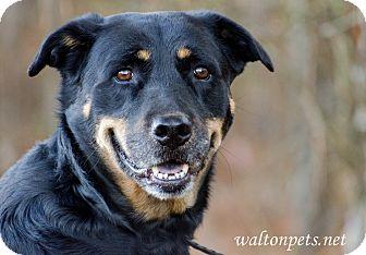 Shepherd (Unknown Type) Mix Dog for adoption in Monroe, Georgia - JASMINE