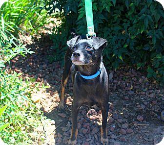 Dachshund Mix Dog for adoption in Yuba City, California - Brody