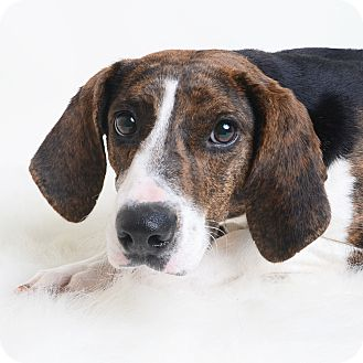 Mixed Breed (Medium)/Hound (Unknown Type) Mix Dog for adoption in Wilmington, Delaware - April