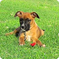 Adopt A Pet :: FLAIR - Hartford, CT