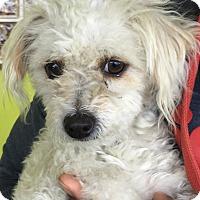 Adopt A Pet :: Elyse - Thousand Oaks, CA