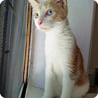 Adopt A Pet :: Ralphie - New York, NY