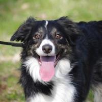 Adopt A Pet :: Ben - CHESTERTOWN, MD
