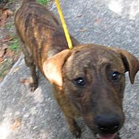 Adopt A Pet :: 17-09-2946 Dawn - Dallas, GA