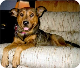 German Shepherd Dog Mix Dog for adoption in Marina del Rey, California - Mona