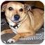 Photo 1 - Chihuahua/Feist Mix Dog for adoption in Latrobe, Pennsylvania - Annabelle