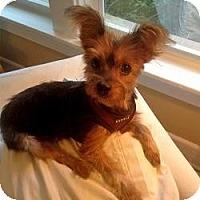 Adopt A Pet :: Snickers - West Palm Beach, FL