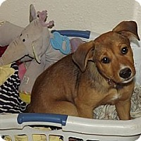 Adopt A Pet :: Junie - Phoenix, AZ