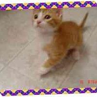 Adopt A Pet :: JAKEY - KANSAS, MO