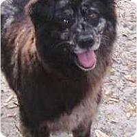 Adopt A Pet :: Miss Celie - Nokomis, FL