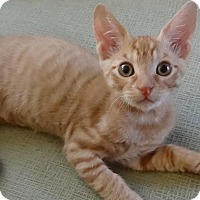 Adopt A Pet :: BINX - Diamond Bar, CA