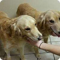 Adopt A Pet :: Huck and Finn - Knoxvillle, TN