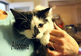 Domestic Mediumhair Cat for adoption in Wichita Falls, Texas - Altoona