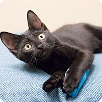 Adopt A Pet :: Rio - Chicago, IL