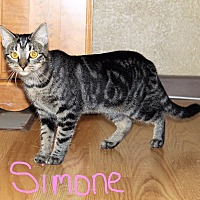 Adopt A Pet :: Simone - Jesup, GA