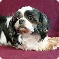 Adopt A Pet :: Holly - Urbana, OH