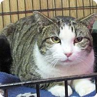 Adopt A Pet :: Friskie - Reeds Spring, MO